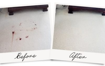 Blood Comes Right Out of Carpet